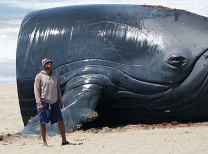 hancockwhale.jpg