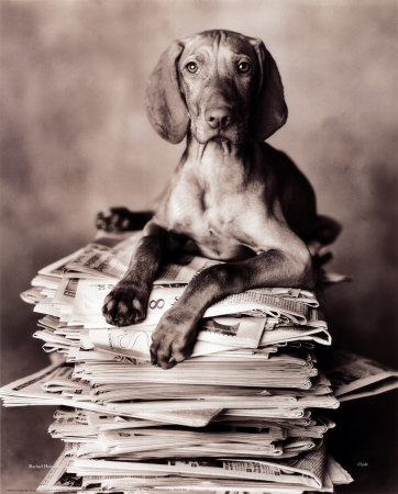 2300-8596~Dog-On-Newspapers-Posters.jpg