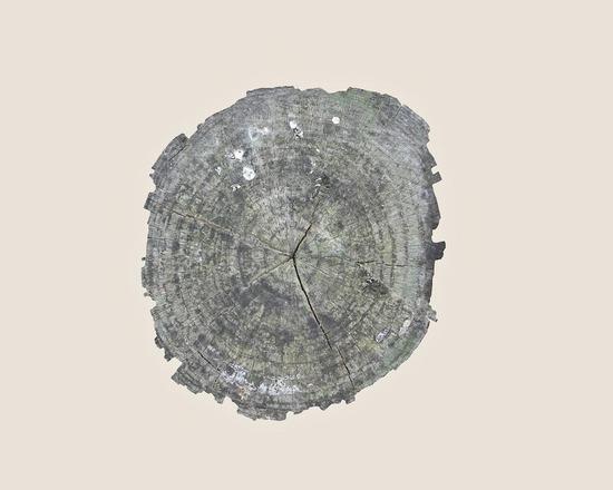 16_muge-yilmaz-trees4_905.jpg