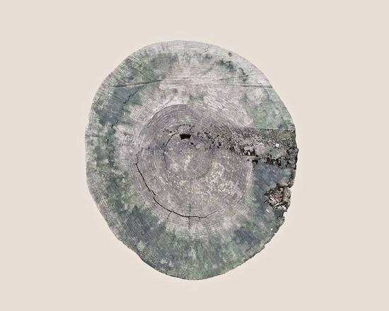 16_muge-yilmaz-trees8_905.jpg