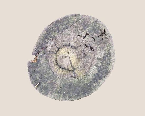 16_muge-yilmaz-trees9_905.jpg