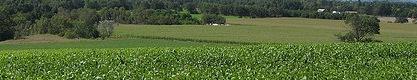 soybeans.jpeg