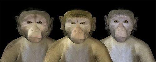 monkeysfreaky.jpg