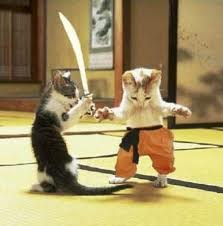 catfight.jpg