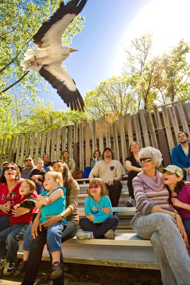 stone zoo birds of prey.jpg