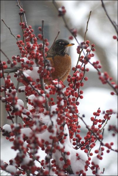 Robin Winter