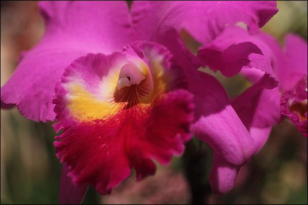 FlowerShowOrchid.jpg