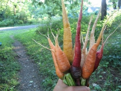 heirloom vegetables.jpg