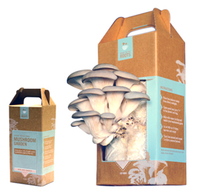 diy-food-gift-grow-your-own-mushrooms.jpg
