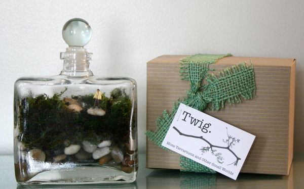 diy-terrarium-kit.jpg