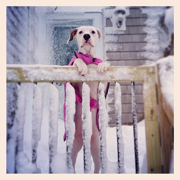 bosnow-nemo-blizzard-instagram-8.jpg