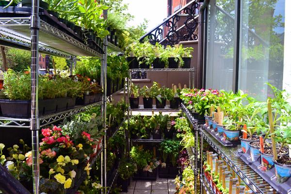Charming Niche Garden1