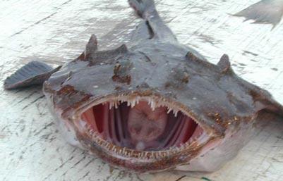 monkfish.jpg