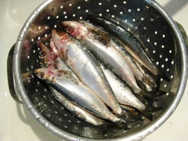 sardinescolander.jpg