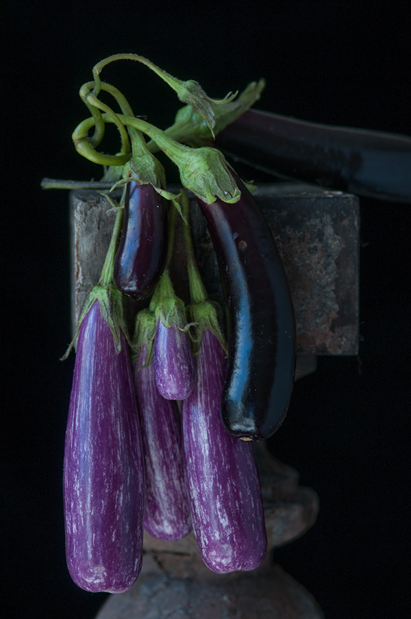 Karlin_Tender Eggplants.jpg