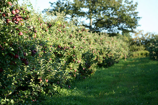 gould-hill-farm_apple-trees_01.jpg