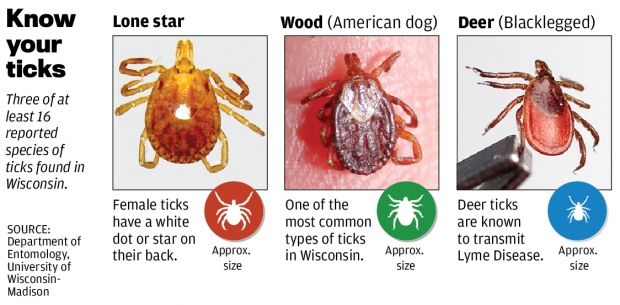 lone star tick image.png