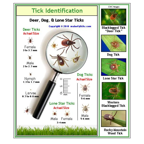 tick identification chart.jpg