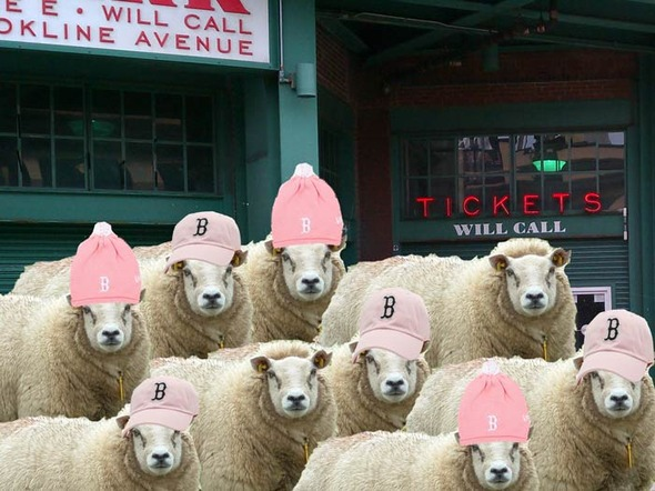 sheepsredsox.jpg
