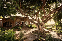 Treeandgreathouse(4x6).jpg