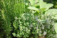 HerbTour-1785Inngarden.jpg