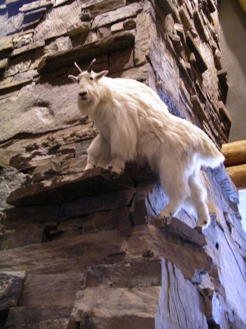 moonlight_lodge_goat.jpg